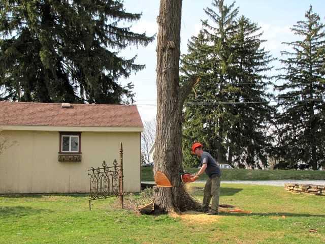 Benefits Of Tree Service