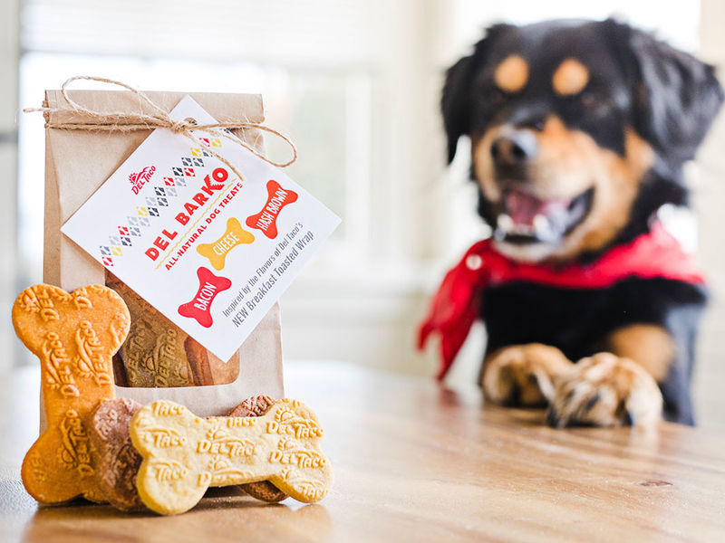 Dose of CBD for Dogs